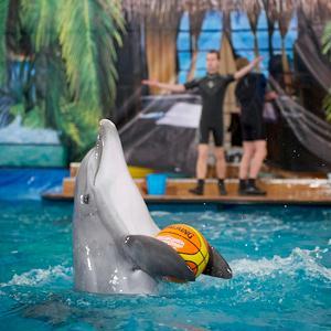 Дельфинарии, океанариумы Кинеля